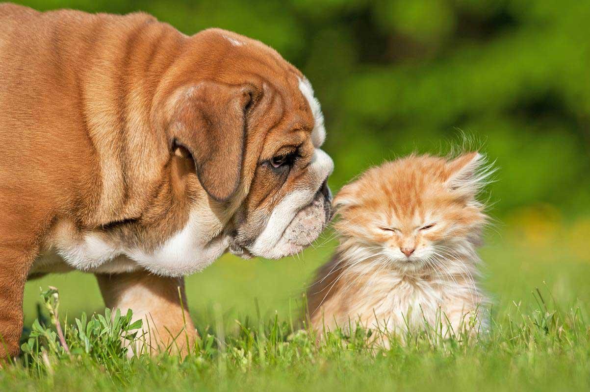 Puppy & Kitten Care Chicago, IL
