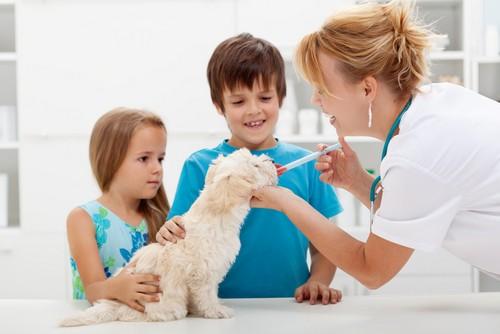 Vaccinations Chicago, IL